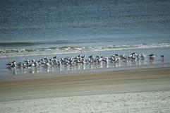 Die grauen Vögel, die im Wasser stehen Stockfoto