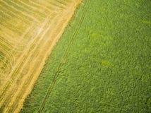 Die Grenze zwischen Feldern Stockfoto