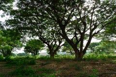 Die große Baumniederlassung Stockbilder
