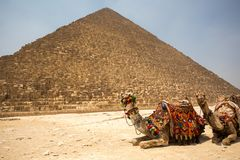 Die große Pyramide mit Kamel stockfotografie