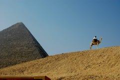 Die große Pyramide von Giseh mit blauem Himmel und Kamel Stockfotografie