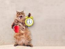 Die große rauhaarige Katze ist sehr lustige Stellung Becher 6 lizenzfreies stockbild