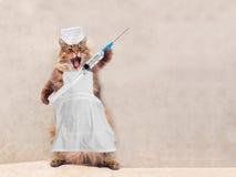Die große rauhaarige Katze ist sehr lustige Stellung Konzept von Medizin 1 Stockbilder
