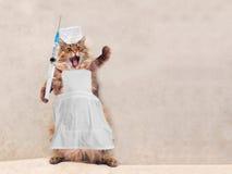 Die große rauhaarige Katze ist sehr lustige Stellung Konzept von Medizin 3 Stockfotografie