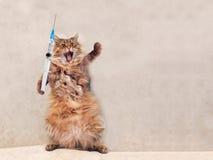 Die große rauhaarige Katze ist sehr lustige Stellung Konzept von Medizin 4 Lizenzfreie Stockfotos