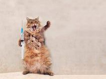 Die große rauhaarige Katze ist sehr lustige Stellung Konzept von Medizin 5 Stockfotografie