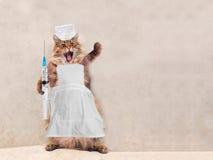 Die große rauhaarige Katze ist sehr lustige Stellung Konzept von Medizin 6 Lizenzfreie Stockbilder