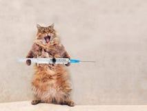Die große rauhaarige Katze ist sehr lustige Stellung Konzept von Medizin 7 Stockbild