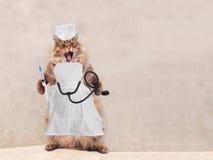 Die große rauhaarige Katze ist sehr lustige Stellung Konzept von Medizin 10 Lizenzfreie Stockfotografie
