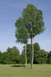 Die großen Bäume Stockfoto