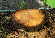 Die großen Bäume werden geschnitten und verlassen nur einen Stumpf lizenzfreies stockbild