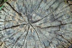 Die großen Bäume werden geschnitten und verlassen nur einen Stumpf stockfotos