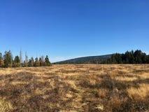 Die großen machen in den Harz-Bergen, Torfhausmoor im Staatsangehörigen fest stockbilder