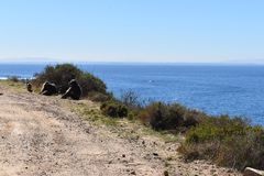 Die großen Paviane, die am Straßenrand auf der Kap-Halbinsel sitzen, bereisen in Cape Town, Südafrika Stockfotografie