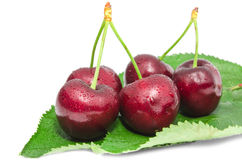 Die große reife Kirschesaftigen süßen beries, die mit Wasser naß sind, lässt Früchte fallen Lizenzfreie Stockbilder
