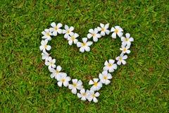 Die Gruppe der Plumeriablume zusammengefügt sind auf Grashintergrund Herz-förmig Lizenzfreies Stockbild