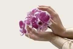 Die Hände der eleganten Frau mit Orchideenblume lizenzfreies stockbild