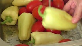 Die Hände der Frau, die Gemüse in der Wanne in der Küche waschen stock video footage