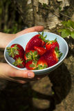 Die Hände der Frau, welche die blaue Schüssel von Erdbeeren halten Lizenzfreies Stockbild