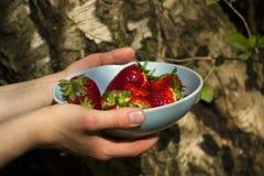 Die Hände der Frau, welche die blaue Schüssel von Erdbeeren halten Lizenzfreies Stockfoto