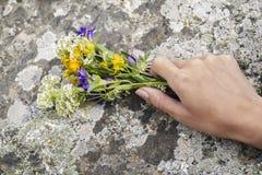 Die Hände der Frauen, die wilde Blumen halten Stockfoto