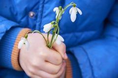Die Hände der Kinder der Schneeglöckchen-(Galanthus-nivalis), die Blumen halten Stockbild
