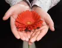 Die Hände der Männer, die eine Blume halten Lizenzfreie Stockfotos