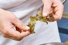 Die Hände, die Kopfsalat addieren, verlässt in Schüssel mit Salat, Nahaufnahme Lizenzfreie Stockfotografie