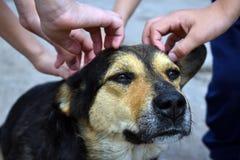 Die Hände und der Kopf der Kinder eines Hundeabschlusses oben Tierschutz stockfotos