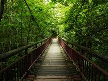 Die hängende Brücke im Grün Stockbild