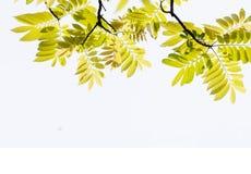 Die hängenden Frühlingsblätter Lizenzfreie Stockfotos