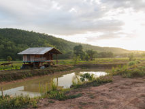 Die Häuschen werden mitten in den Reisfeldern errichtet Lizenzfreie Stockfotos