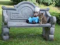 Die hübsche Katze sitzt nahe bei der Zahl einer englischen Bulldogge auf der Gartenbank lizenzfreie stockbilder