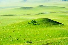 Die Hügel auf der grünen Sommersteppe Lizenzfreie Stockbilder