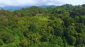 Die Hügel, die im üppigen Grün in botanischem Garten Batumis bedeckt werden, befördern Betrieb entlang mit dem Zug stock video footage