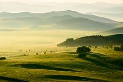 Die Hügel und die Bäume in der Wiese Stockfotos