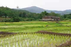 Die Hütte des Landwirts Stockfoto