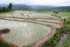 Die Hütte des Landwirts Stockfotografie