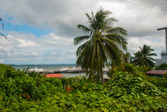 Die Hafengebiet- und Palmen Sandakan, Borneo, Sabah, Malaysia Stockbilder