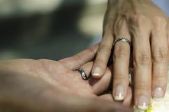 Die Hand der Braut und des Bräutigams, die mit den Eheringen zusammenhält stockfotografie