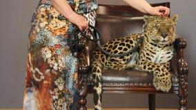 Die Hand der Frau, die einen Leoparden streicht stock video footage