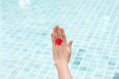 Die Hand der Frau mit roter Blume Stockfotos