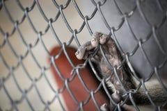 Die Hand des Affen auf Käfig stockfoto