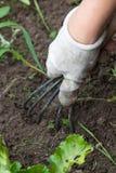 Die Hand, die das Gartenarbeitwerkzeug hält Stockfoto