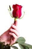 Die Hand, die schönes Rot anhält, stieg stockbilder