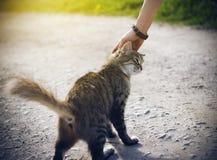 Die Hand einer Frau, die ein flaumiges Kätzchen des jungen gestreiften Obdachlosen streicht lizenzfreie stockbilder