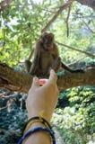 Die Hand eines Mädchens, das auf den kleinen Affen zeigt Stockfotografie