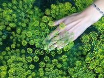 Die Hand und die Blumen der Frauen Stockfotos