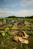 Die Handschuhe des Landwirts Stockfotografie