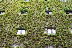 Die Hausfassade, die mit Wein umfasst wird, verlässt in den Straßen von München, Deutschland stockfotos